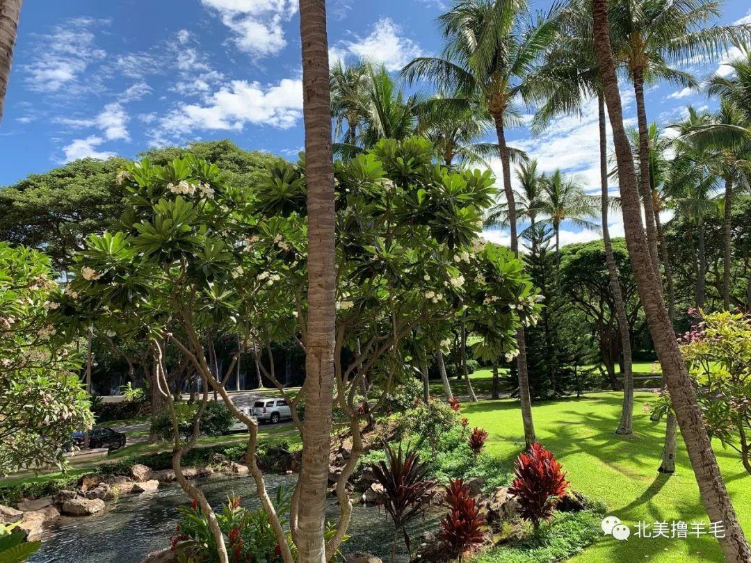 【旅游体验】夏威夷 茂宜岛华尔道夫 酒店体验